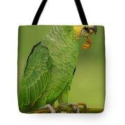 Orange-winged Parrot Amazonian Ecuador Tote Bag