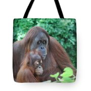 Orangutan Family Tote Bag