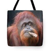 Orangutan Portrait Tote Bag