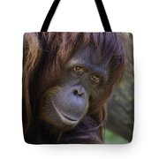 Orangutan Portrait Tote Bag