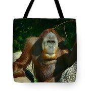 Orangutan Scratches With Stick Tote Bag