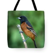 Orchard Oriole Icterus Spurius Adult Tote Bag