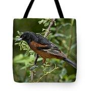 Orchard Oriole Male Tote Bag
