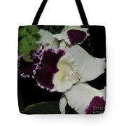 orchid 220 Cattleya Moscombe 'The King'  2 of 3 Tote Bag