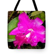 Orchid Cattleya Tote Bag