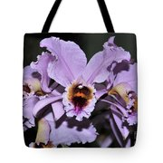 Orchid Cattleya Percivaliana Christmas Cattleya Tote Bag