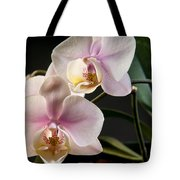 Orchid In Bloom Tote Bag
