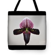Orchid Paphiopedilum Satchel Paige X Black Beauty Tote Bag