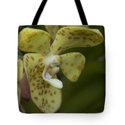 Yellow Dragon Orchid Tote Bag