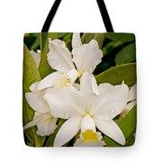 Orchid Sophronitis Tote Bag