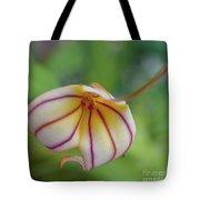 Orchids - Masdevallia Hybrid Tote Bag
