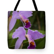 Orchids Pictures 1 Tote Bag