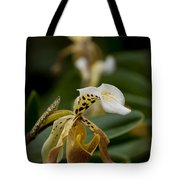 Orchids Pictures 28 Tote Bag