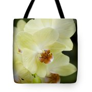 Orchids Pictures 34 Tote Bag
