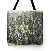 Oregon Willow Catkins Tote Bag