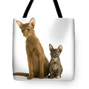 Oriental Cat And Kitten Tote Bag