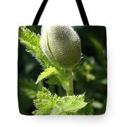 Oriental Poppybud Tote Bag