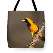 Oriole On Ocotillo Tote Bag