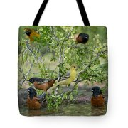 Orioles At The Pool Tote Bag