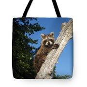 Orphaned Raccoon Tote Bag