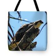 Osprey 2 Tote Bag