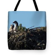 Osprey Chicks In Nest Tote Bag