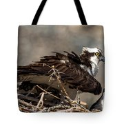 Osprey Family Huddle Tote Bag