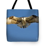 Osprey Hovering Tote Bag