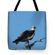 Osprey In A Tree Tote Bag