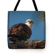 Osprey In Pine 3 Tote Bag