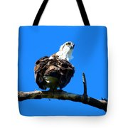 Osprey On A Branch Tote Bag