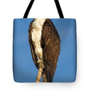 Osprey Perched In Yellowstone National Park Tote Bag