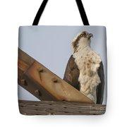 Osprey -seahawk Tote Bag