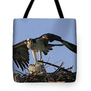 Osprey Warning Tote Bag