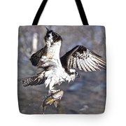 Osprey With Walleye Fish Tote Bag