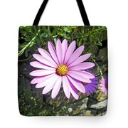 Osteospermum - African Daisy - Pink Tote Bag