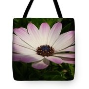 Osteospermum Whiter Shade Of Pale Tote Bag