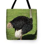 Ostrich 1 Tote Bag