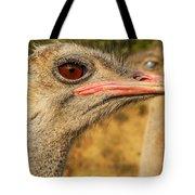 Ostrich Closeup Tote Bag by Jess Kraft