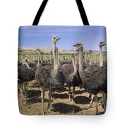 Ostrich Females South Africa Tote Bag