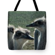 Ostrich Round-up Tote Bag