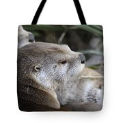 Otter And Family Tote Bag