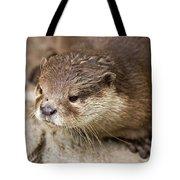 Otter Closeup Tote Bag