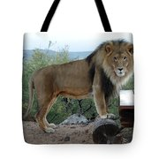 Out Of Africa  Lion 1 Tote Bag