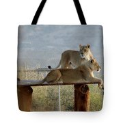 Out Of Africa Lions Tote Bag