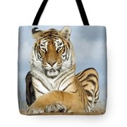 Out Of Africa Tiger 3 Tote Bag