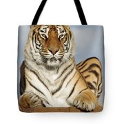 Out Of Africa Tiger 4 Tote Bag