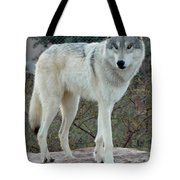 Out Of Africa Wolf  Tote Bag