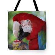 P Is For Parrot Tote Bag