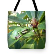 Pacific Chorus Frog On A Rhodo  Tote Bag